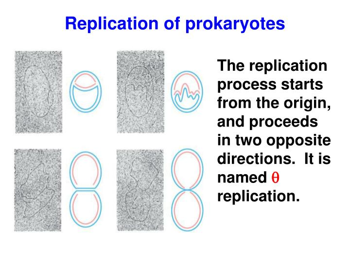 Replication of prokaryotes