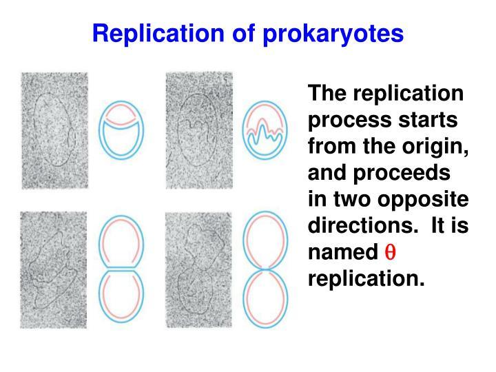 Replication of prokaryotes