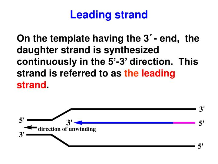 Leading strand