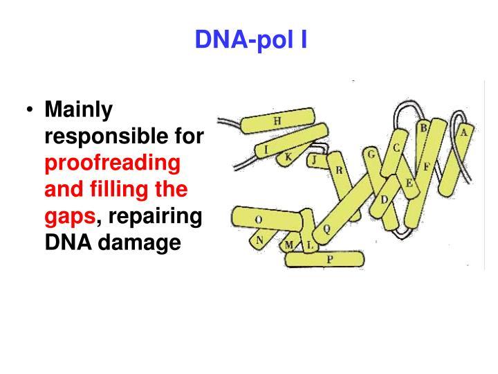 DNA-pol I