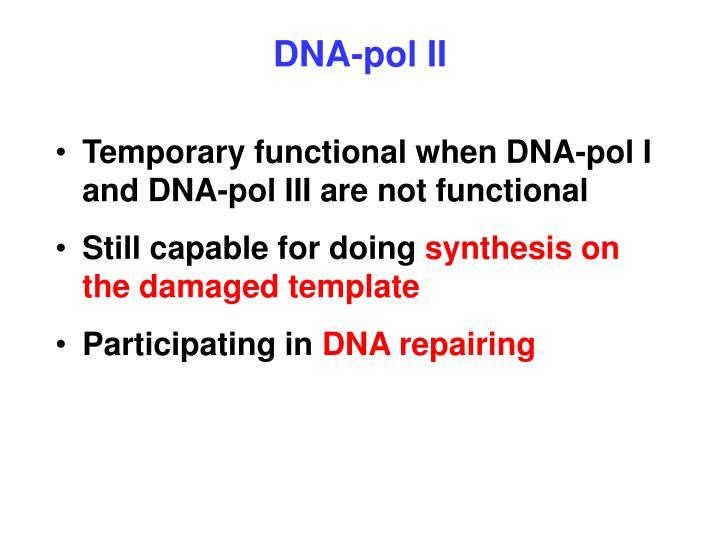 DNA-pol II