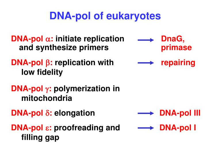 DNA-pol of eukaryotes