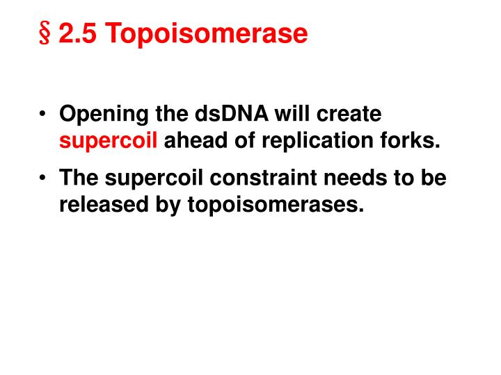 Opening the dsDNA will create