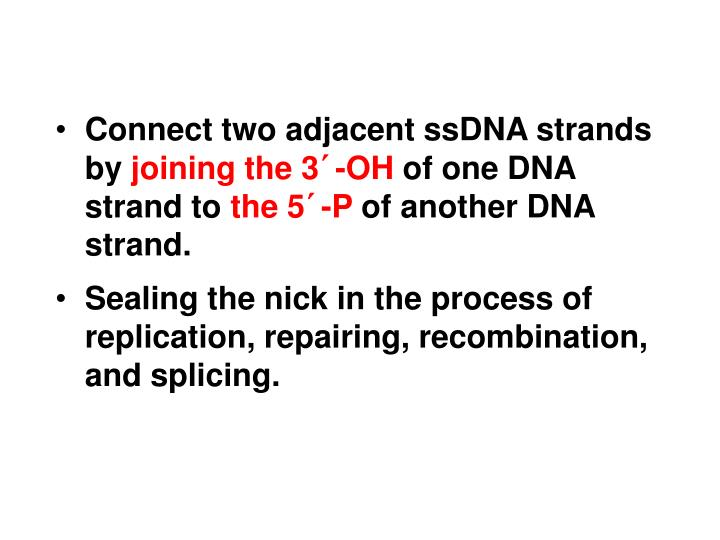 Connect two adjacent ssDNA strands by