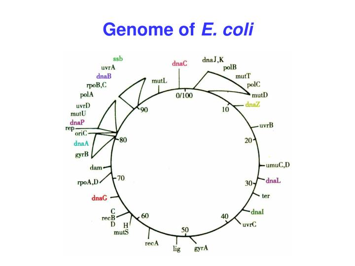 Genome of