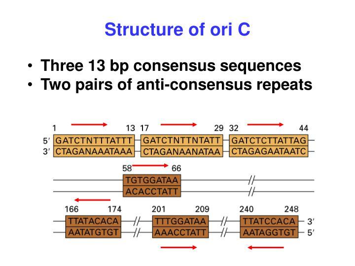Structure of ori C