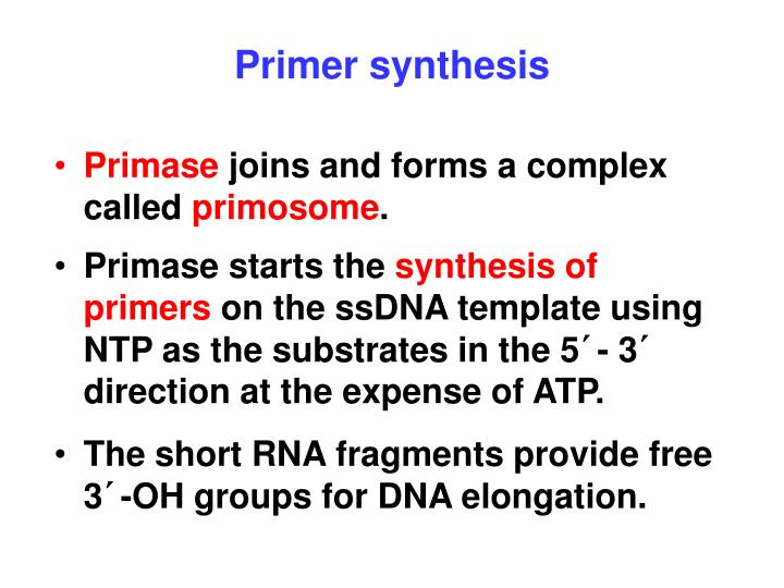 Primer synthesis