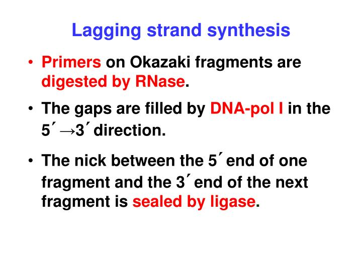 Lagging strand synthesis