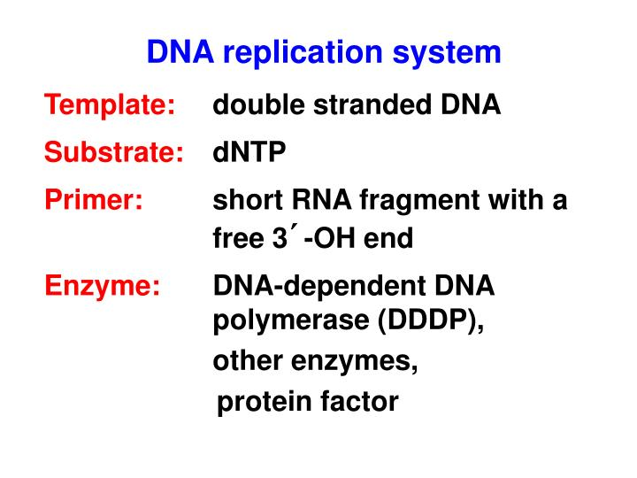 DNA replication system