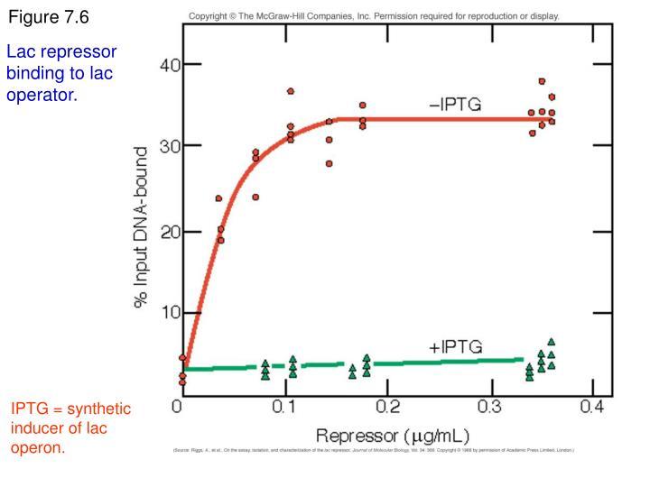 Lac repressor binding to lac operator.
