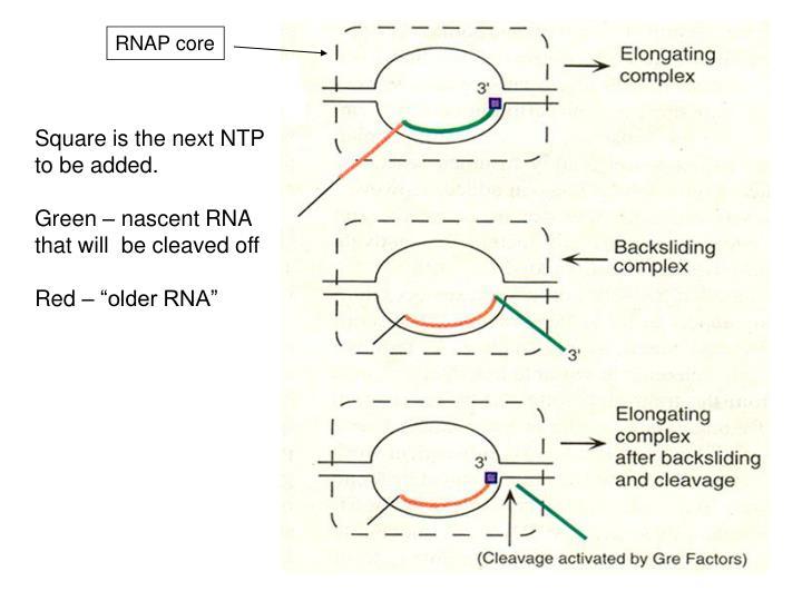 RNAP core
