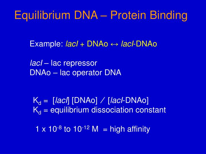Equilibrium DNA – Protein Binding