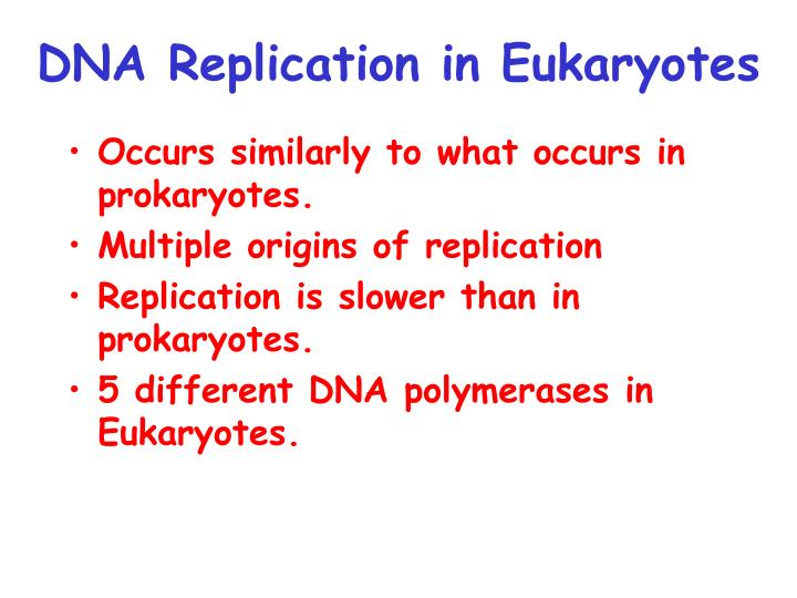 DNA Replication in Eukaryotes