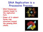 dna replication is a processive process