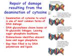 repair of damage resulting from the deamination of cytosine