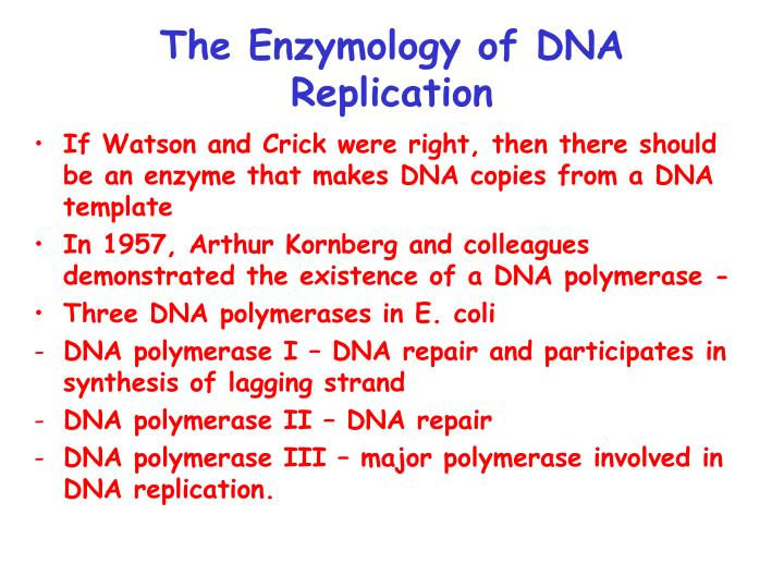 The Enzymology of DNA Replication