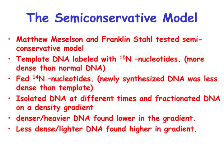 The Semiconservative Model