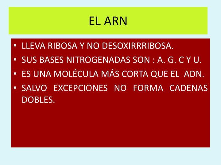 EL ARN