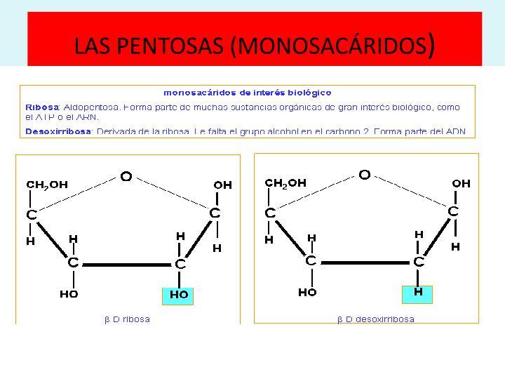 LAS PENTOSAS (MONOSACÁRIDOS