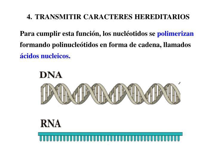 TRANSMITIR CARACTERES HEREDITARIOS