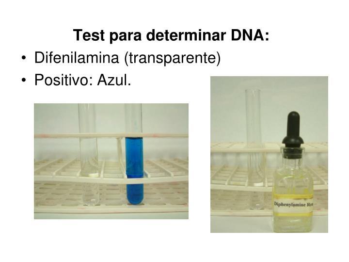 Test para determinar DNA:
