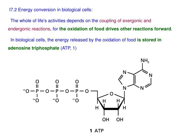 I7.2 Energy conversion in biological cells: