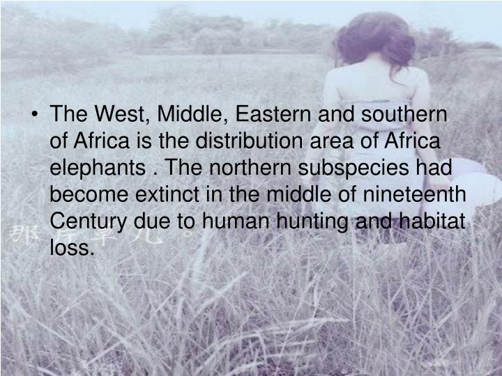 The West, Middle, Eastern and southern of Africa is the distribution area of Africa elephants . The northern subspecies had become extinct in the middle of nineteenth Century due to human hunting and habitat loss.