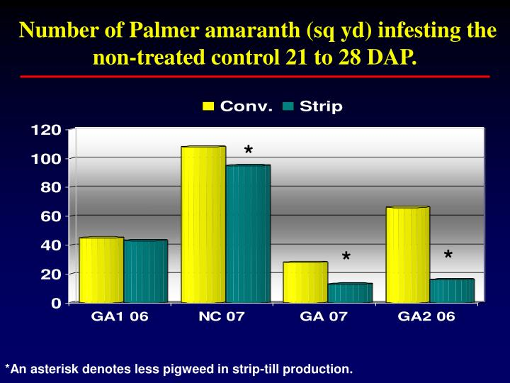Number of Palmer amaranth (sq yd) infesting the non-treated control 21 to 28 DAP.