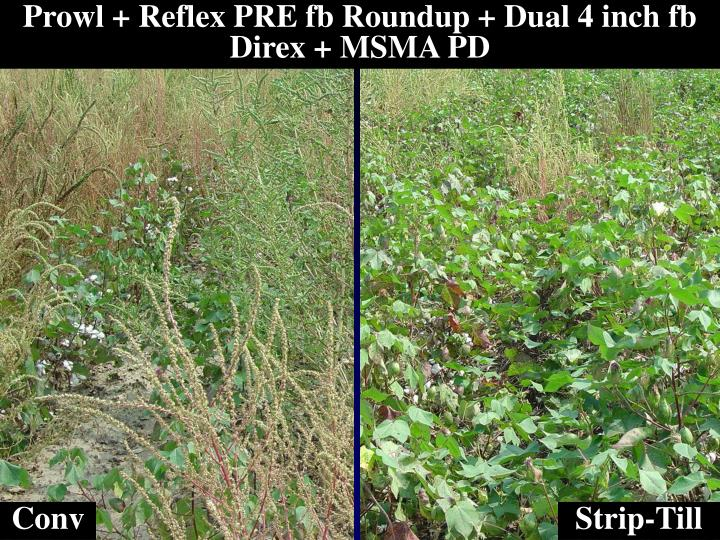 Prowl + Reflex PRE fb Roundup + Dual 4 inch fb Direx + MSMA PD