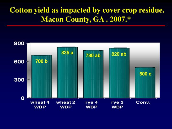 Cotton yield as impacted by cover crop residue.  Macon County, GA . 2007.*