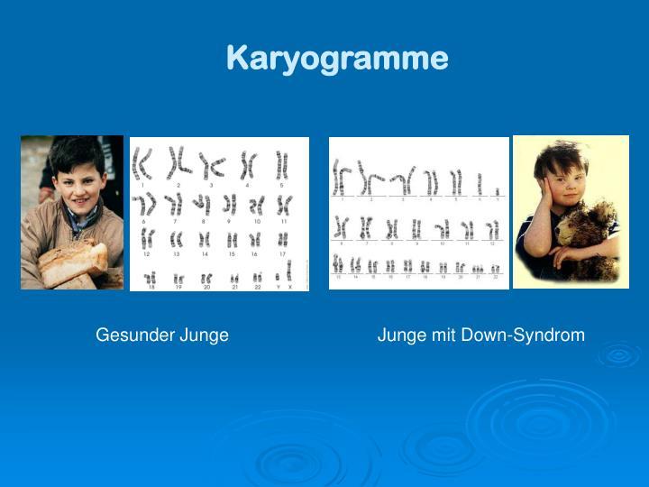 Karyogramme