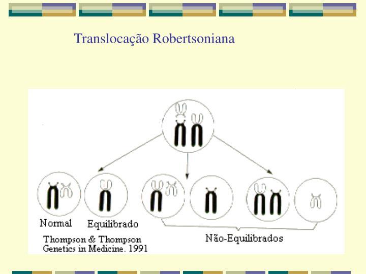 Translocação Robertsoniana