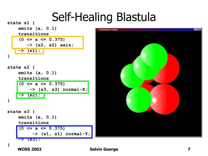 Self-Healing Blastula