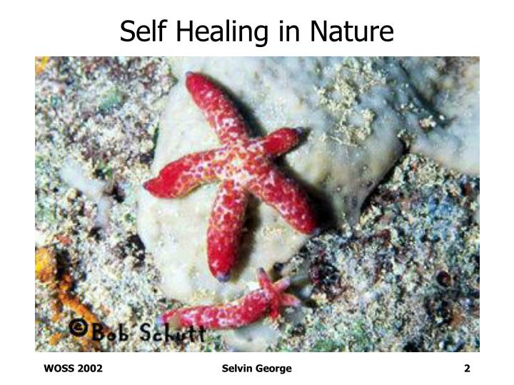 Self healing in nature