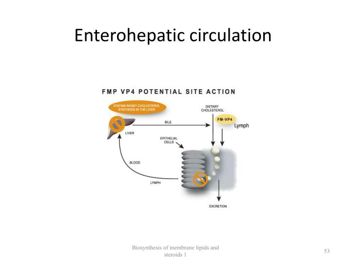 Enterohepatic circulation