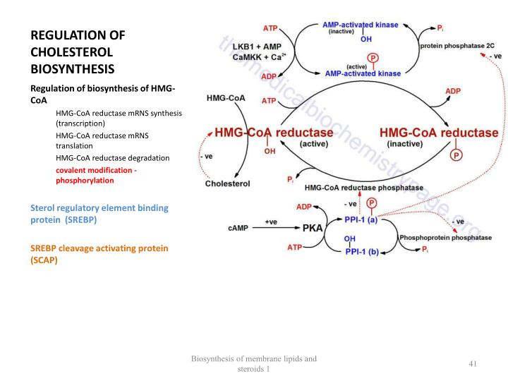REGULATION OF CHOLESTEROL  BIOSYNTHESIS