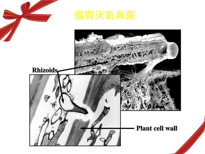 瘤胃厌氧真菌