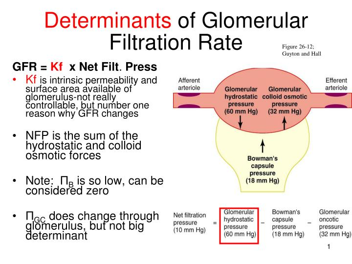 glomerular filtration rate Learn about your gfr (glomerular filtration rate) and egfr (estimated glomerular filtration rate), a blood test for renal function.