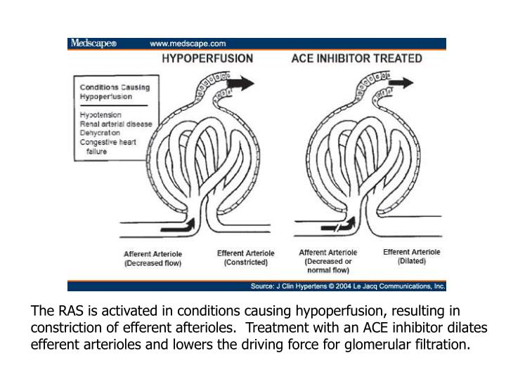 The RAS is activated in conditions causing hypoperfusion, resulting in