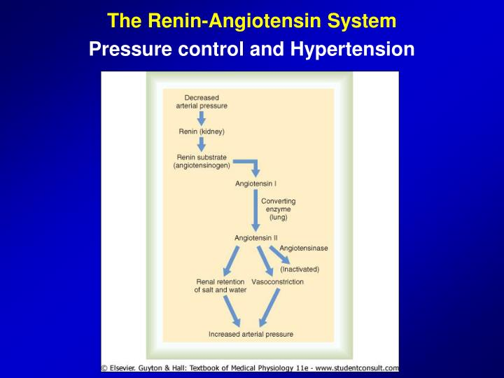 The Renin-Angiotensin System