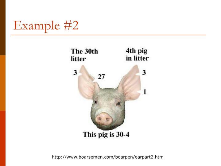 Example #2