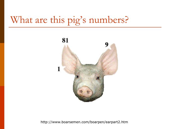 What are this pig's numbers?