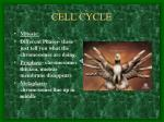 cell cycle3