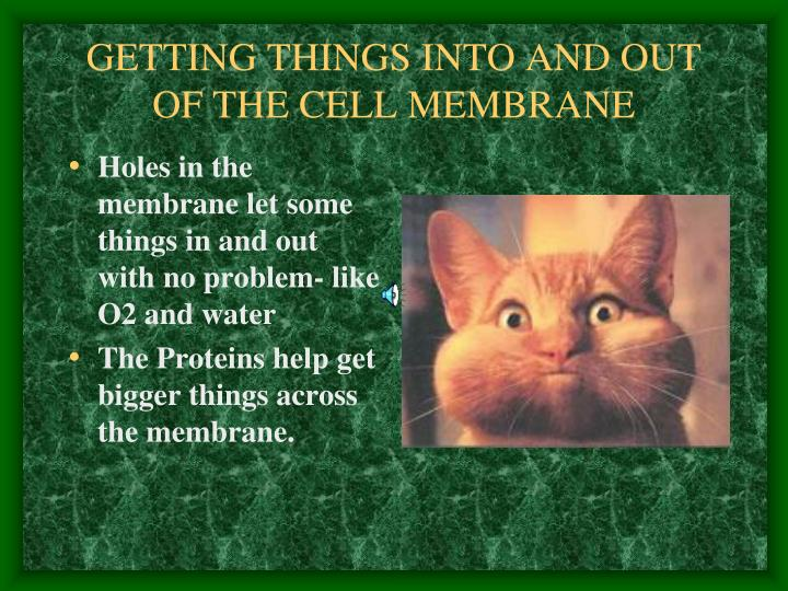 GETTING THINGS INTO AND OUT OF THE CELL MEMBRANE