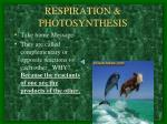 respiration photosynthesis