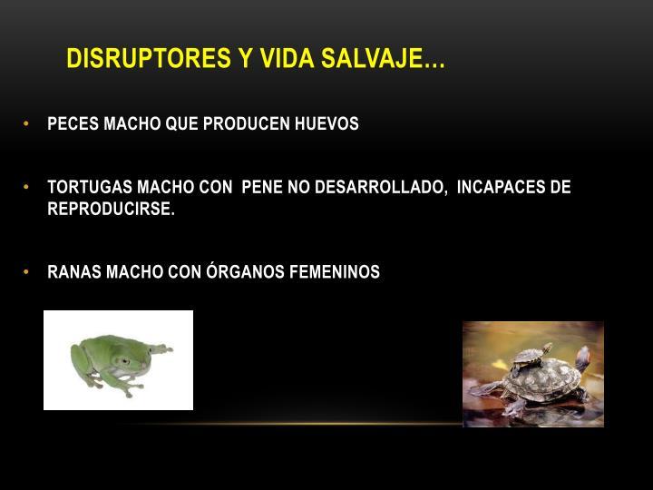 Disruptores y vida salvaje…