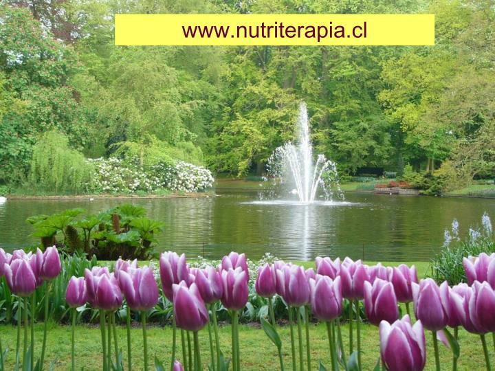 www.nutriterapia.cl