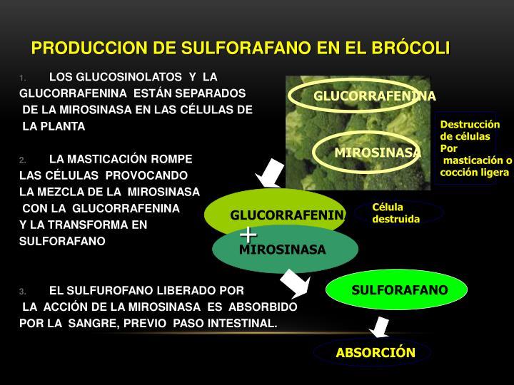 PRODUCCION DE SULFORAFANO EN EL BRÓCOLI
