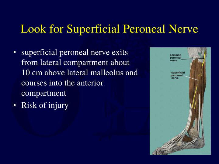 Look for Superficial Peroneal Nerve