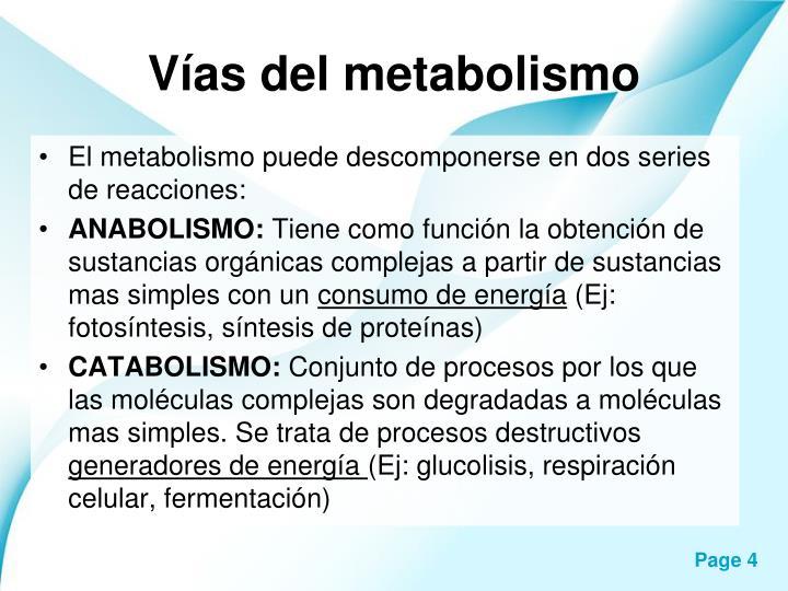 Vías del metabolismo